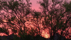 Palo Verde Tree silhouetted by a blazing sunset in the Superstition Mountains, Arizona stock footage