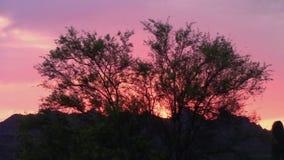 Palo Verde Tree silueteó por una puesta del sol ardiente en las montañas de la superstición, Arizona almacen de video