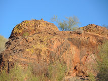 Palo Verde Trees Lining the Red Cliff Stock Photo