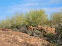 Palo Verde und rote Felsen-Flusssteine stockbilder