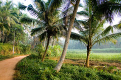 Palode agriculture field in Kerala. India Royalty Free Stock Photo