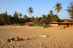Palolem beach. Dogs on Palolem beach Goa India Royalty Free Stock Images