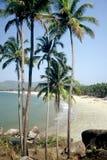 Palolem Beach,Goa,India. Palm Trees at Palolem Beach,Goa Royalty Free Stock Images