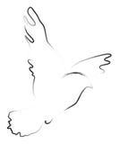 Paloma ilustración del vector