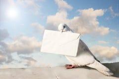 Paloma autoguiada hacia el blanco blanca Foto de archivo