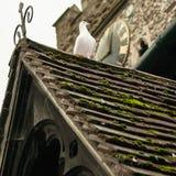 Paloma blanca en iglesia Imagen de archivo