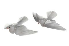 Paloma de dos blancos Fotos de archivo libres de regalías