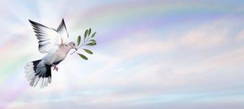 Paloma de la paz fotografía de archivo