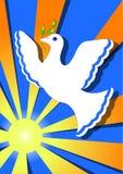 Paloma de la paz en el sol Imagen de archivo libre de regalías