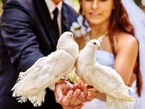 Paloma de la tenencia de novia y del novio al aire libre Imagen de archivo