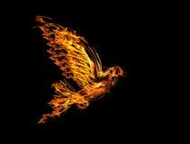 Paloma del vuelo de la llama aislada en negro Imagenes de archivo