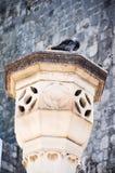 Paloma en columna Imagenes de archivo