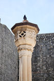 Paloma en columna en la ciudad vieja de Dubrovnik Foto de archivo libre de regalías