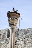 Paloma en columna en la ciudad vieja de Dubrovnik Imagen de archivo libre de regalías