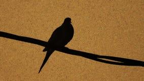 Paloma en corkboard Fotos de archivo