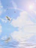 Paloma en el cielo Fotos de archivo
