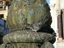 Paloma en el pilar en el cuadrado de la marca de San Imagen de archivo