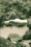 Paloma en la mano Fotos de archivo
