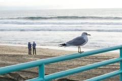 Paloma en la playa Foto de archivo libre de regalías