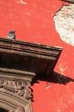 Paloma en la repisa Imagen de archivo libre de regalías