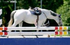Paloma en obstáculo en un circuito de carreras del caballo Imágenes de archivo libres de regalías