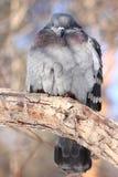 Paloma en parque del invierno Foto de archivo