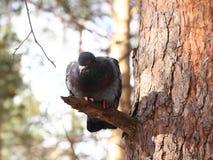 Paloma en parque del invierno Imagen de archivo