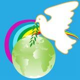 Paloma en pista Imagen de archivo libre de regalías