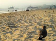 Paloma en una playa del mar Imagenes de archivo