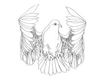 Paloma en vuelo libre Vector aislado en el fondo blanco trazado libre illustration