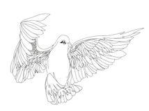 Paloma en vuelo libre Vector aislado en el fondo blanco trazado stock de ilustración
