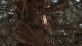 Paloma que duerme en árbol almacen de video