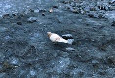 Paloma que se coloca en el pavimento analizado en las calles de Kyiv imagen de archivo