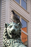 Paloma y león Fotos de archivo libres de regalías