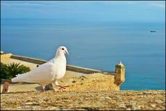 Paloma y mar del español Imagenes de archivo