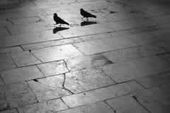 Paloma y paloma en la noche Imagen de archivo libre de regalías