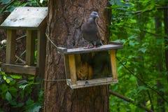 Paloma y squirel en el bosque en verano fotos de archivo