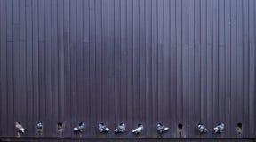 palomas Fotos de archivo libres de regalías