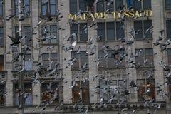 palomas Imagen de archivo libre de regalías