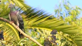 Palomas animales de los pájaros en árbol metrajes