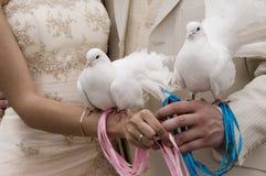 Palomas blancas Fotos de archivo