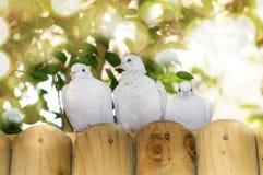 Palomas blancas Imagen de archivo
