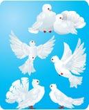 Palomas blancas stock de ilustración