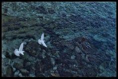 Palomas blancas Imagenes de archivo