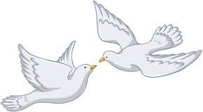 Palomas blancas que vuelan junto Imagen de archivo