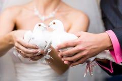 Palomas blancas Wedding Imagen de archivo libre de regalías