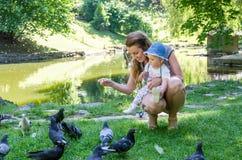 Palomas de alimentación de la mamá y de la hija en un parque en el lago Fotografía de archivo