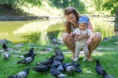 Palomas de alimentación de la mamá y de la hija en un parque en el lago Imagen de archivo