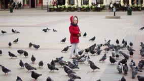 Palomas de alimentación de la muchacha en el cuadrado central de Kraków, Polonia metrajes
