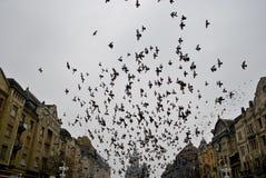 Palomas de Flyibg fotografía de archivo libre de regalías